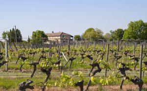 chateau-scylla-vin-vignoble-bordeaux-agathe-duchesne-blog-agatwe-paysage