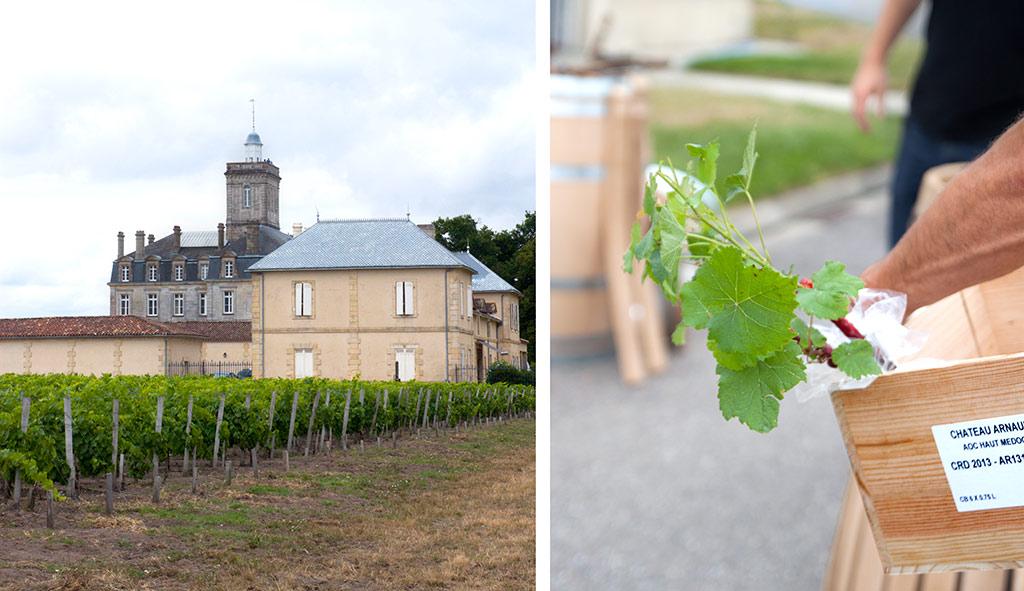 chateau-larose-trintaudon-medoc-agathe-duchesne-blog-vin-vignoble