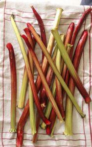 recolte-rhubarbe-tarte-rustique-sans-gluten