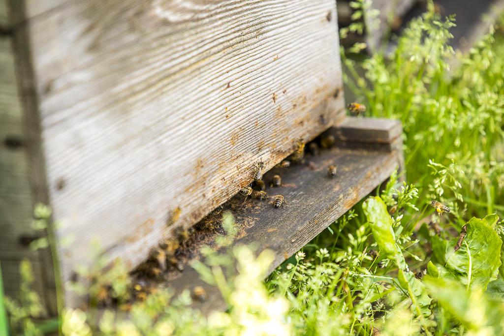 verger-de-la-blottiere-agathe-duchesne-blog-abeilles-ruches