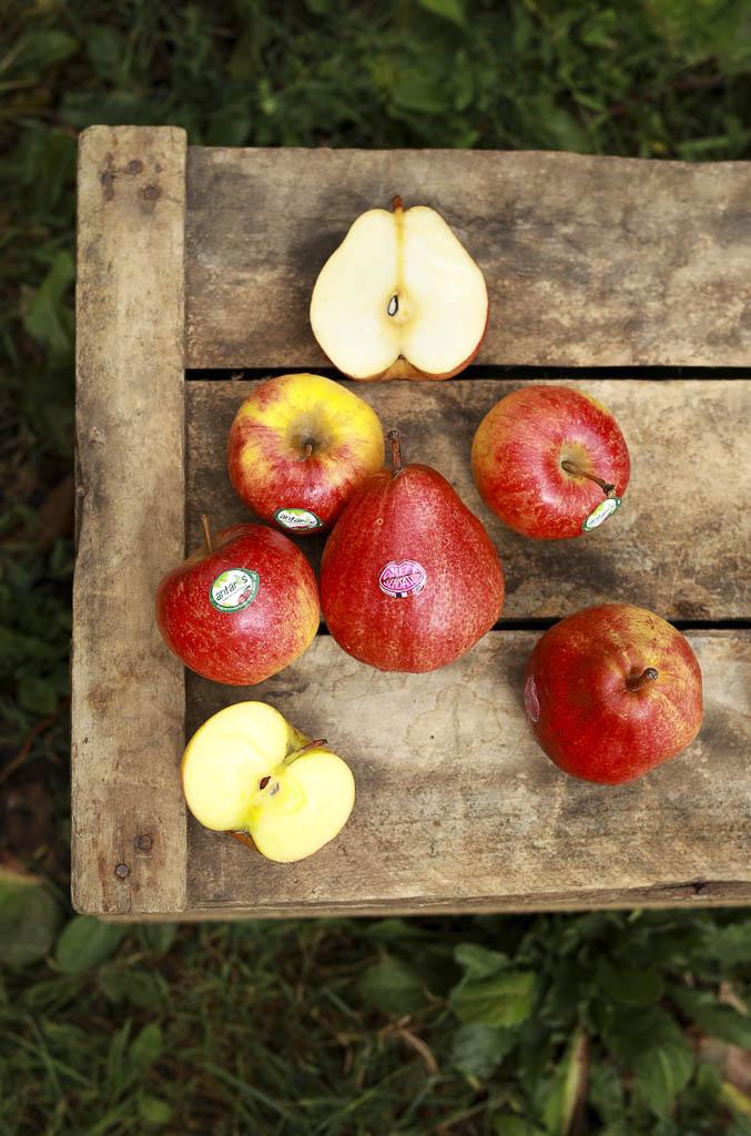 verger-de-la-blottiere-agathe-duchesne-blog-pommes-et-poires